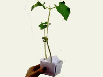 mini cajita de regalo germinadora para